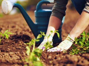 ترفندهای شگفت انگیز باغبانی